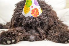 Cão peludo preto que encontra-se na cadeira branca que veste um chapéu da festa de anos Fotografia de Stock