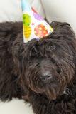 Cão peludo preto que encontra-se na cadeira branca que veste um chapéu da festa de anos Fotografia de Stock Royalty Free