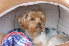 Cão pensativo Foto de Stock