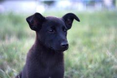 Cão pensativo Imagens de Stock