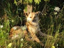Cão pequeno Imagem de Stock Royalty Free