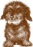 Cão pequeno ilustração royalty free