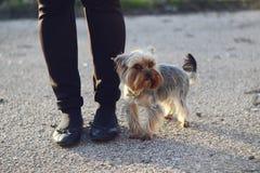 Cão pequeno Imagens de Stock