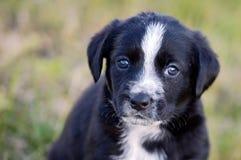 Cão pequeno adorável fotografia de stock royalty free