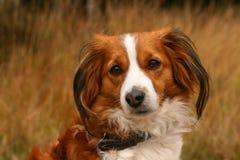 Cão pequeno bonito Fotografia de Stock