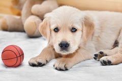 Cão pequeno engraçado fotografia de stock royalty free