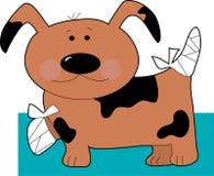 Cão pequeno nas ataduras Imagens de Stock