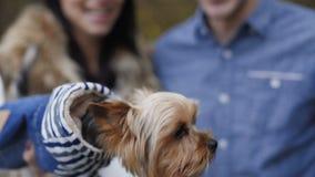 Cão pequeno que descasca nas mãos da fêmea na floresta 4K vídeos de arquivo