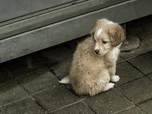 Cão pequeno triste imagens de stock