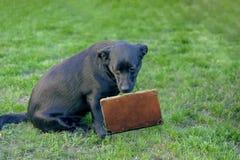 Cão pequeno triste exposto no tempo de férias imagem de stock royalty free