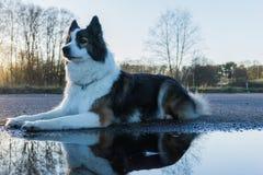 Cão perto da água fotografia de stock