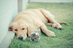 Cão pobre imagem de stock