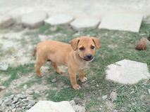 Cão pobre do cão indiano da rua na rua imagem de stock royalty free