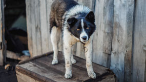 Cão pobre perto de sua casa Fotografia de Stock Royalty Free