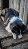 Cão pobre perto de sua casa Fotos de Stock Royalty Free