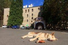 Cão preguiçoso em Rila Foto de Stock Royalty Free