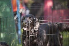 Cão preto atrás da cerca Foto de Stock Royalty Free