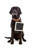 Cão preto com o quadro-negro que pode escrever-se Fotos de Stock Royalty Free