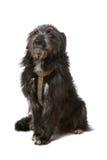 Cão preto da raça misturada Fotografia de Stock Royalty Free