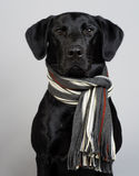 Cão preto do Retriever de Labrador Fotos de Stock Royalty Free