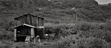 Cão preto e branco e sua casa de madeira imagem de stock