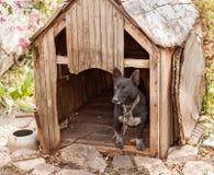 Cão preto na casa de madeira Fotografia de Stock