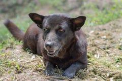 Cão preto na natureza Fotos de Stock