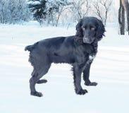 Cão preto na neve imagem de stock