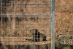 Cão preto no canil fotografia de stock