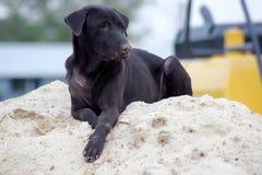 Cão preto que encontra-se em uma pilha da areia para a construção Fotografia de Stock Royalty Free