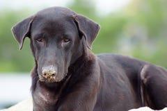 Cão preto que encontra-se em uma pilha da areia para a construção Fotos de Stock