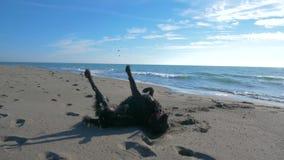 Cão preto que encontra-se na areia no beachnear a linha de mar video estoque