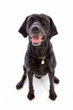 Cão preto que senta-se com a boca aberta Imagem de Stock Royalty Free