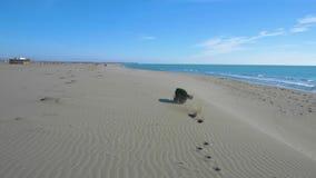 Cão preto que trava uma vara de madeira na praia perto da linha de mar video estoque