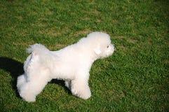 Cão pronto para a ação Foto de Stock