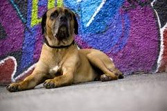 Cão psicadélico Foto de Stock Royalty Free
