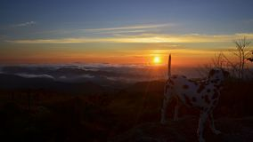 Cão que admira o nascer do sol nas montanhas fotografia de stock royalty free