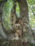 Cão que anda através do furo no tronco de árvore Fotografia de Stock