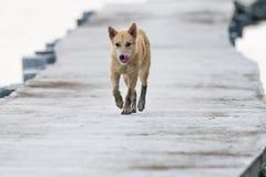 Cão que anda na ponte concreta Imagem de Stock