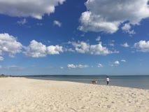 Cão que anda na praia Imagens de Stock