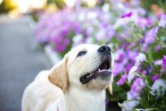 Cão que anda no parque Foto de Stock