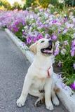Cão que anda no parque Fotos de Stock Royalty Free