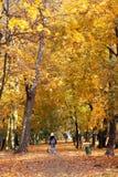 Cão que anda no parque da queda Foto de Stock Royalty Free