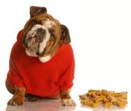 Cão que aprecia os ossos de cão Fotos de Stock Royalty Free