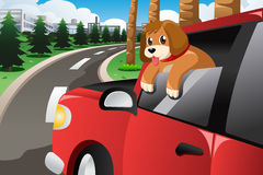 Cão que cola sua cara fora da janela de carro Fotografia de Stock
