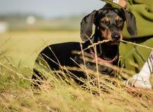 Cão que come a grama imagens de stock royalty free