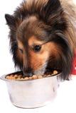 Cão que come o alimento de uma bacia Fotografia de Stock