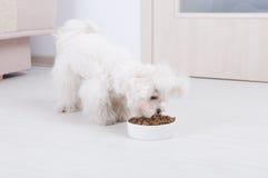 Cão que come o alimento seco foto de stock royalty free