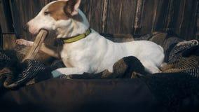 Cão que come um osso video estoque