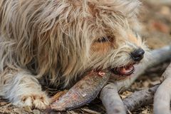 Cão que come um peixe Fotos de Stock